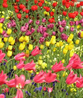 Радостный май Никитского сада. Фото Владимира Азарта
