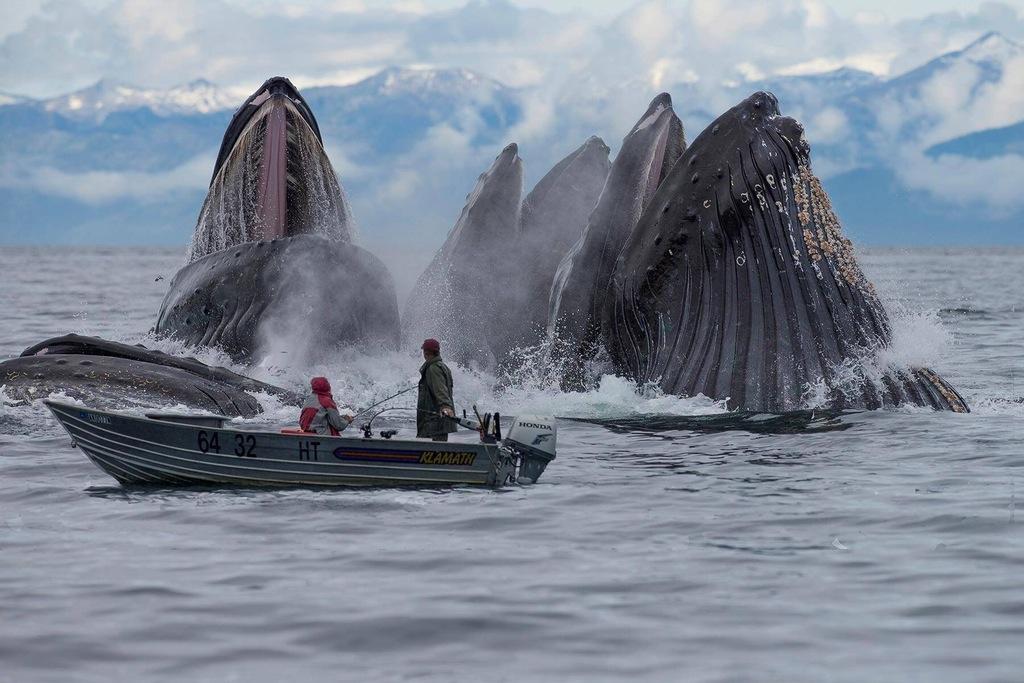 лодка прыжок кита