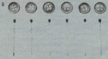 рис. 5.jpg