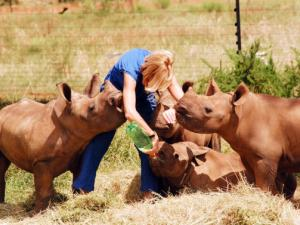 Orphaned-Rhinos-whose-mothers-were-poached2