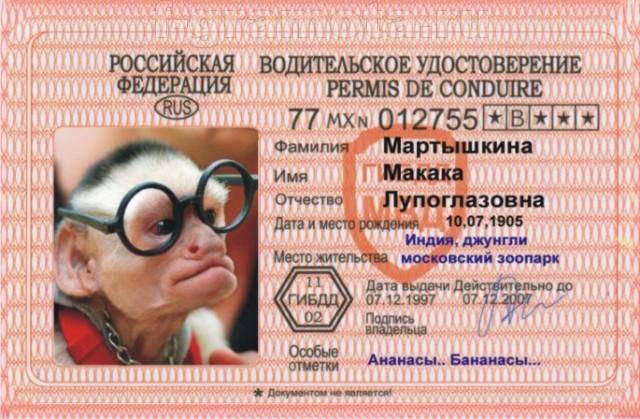 Картинки прикольные водительские права, марта раскраска