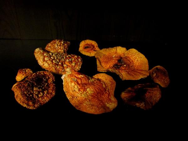 Сушеные грибочки.