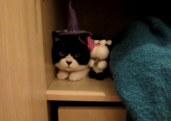 Кот тоже любит подарки!
