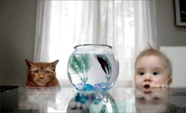 О чем думает кот?
