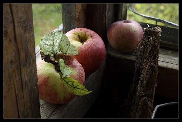 Осенние посадки.