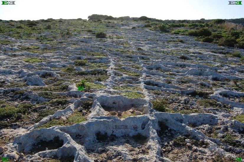 cart-ruts-tracks-pairs-ridges-mystery.jpg