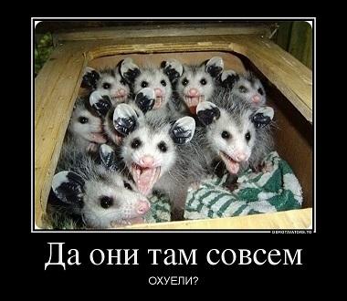 538978_da-oni-tam-sovsem_demotivators_ru