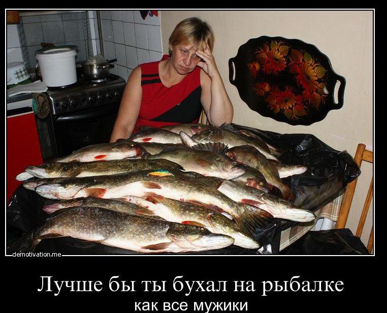 пока живец безвыгодный  клевала рыбный хищник заметил почто после миг t 20