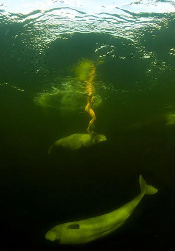 balinalarla-yuzdu-natalia-avseenko-balina-1270565