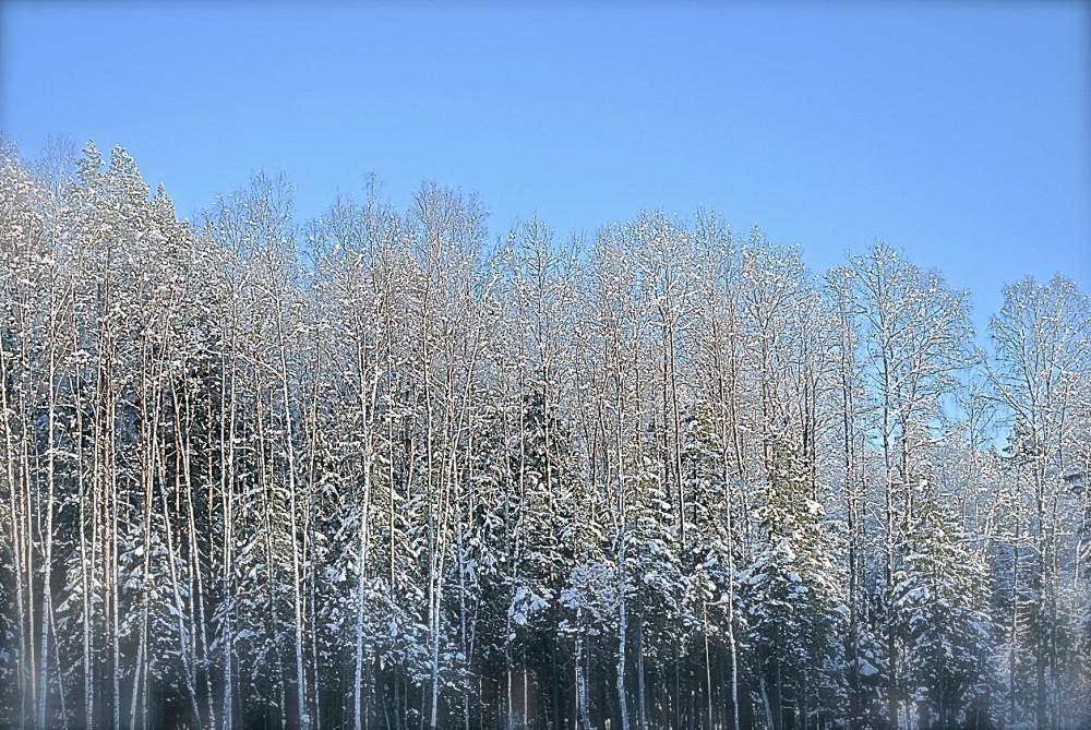 зима05