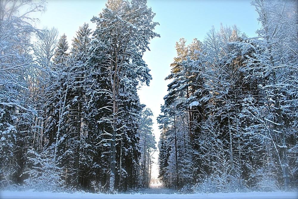 зима06