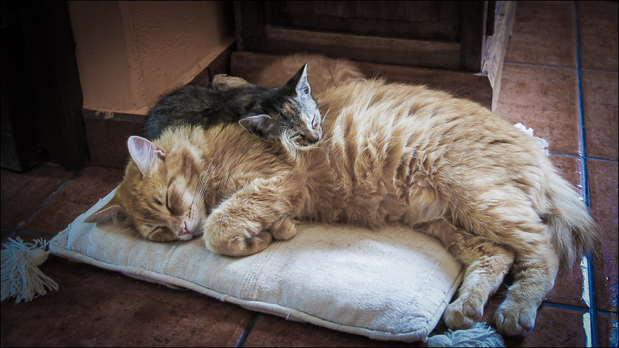 6.cats_and_dogs-03815