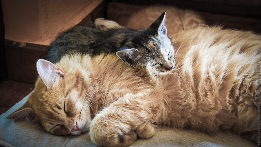 7.cats_and_dogs-03816