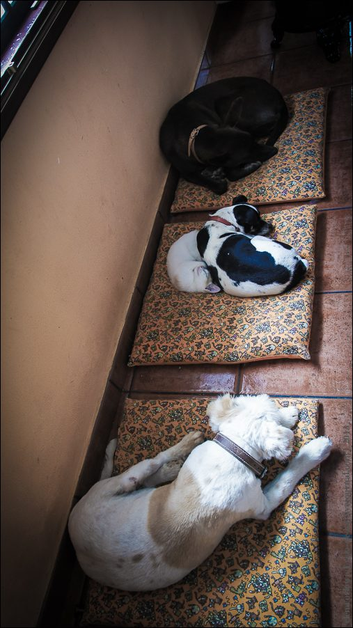 8.cats_and_dogs-03810