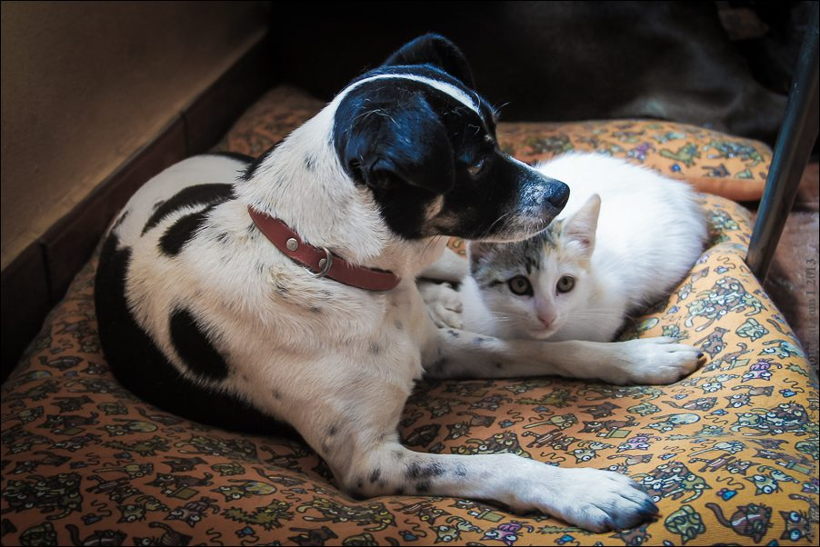 9.cats_and_dogs-03807