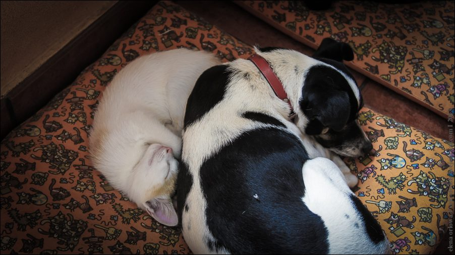 10.cats_and_dogs-03812
