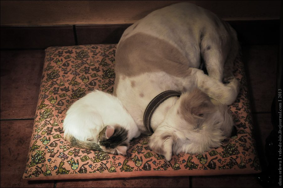 11.cats_and_dogs-03819