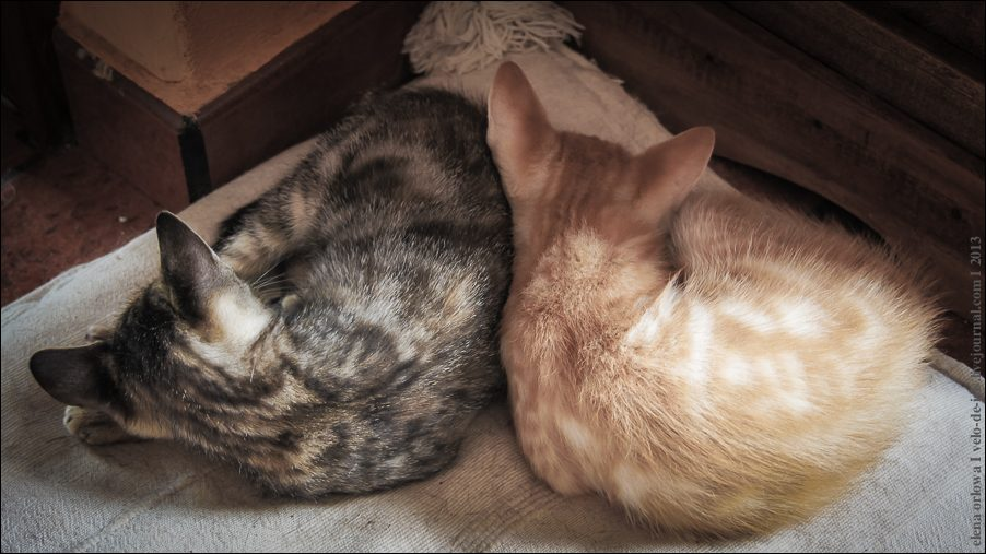 12.cats_and_dogs-03814