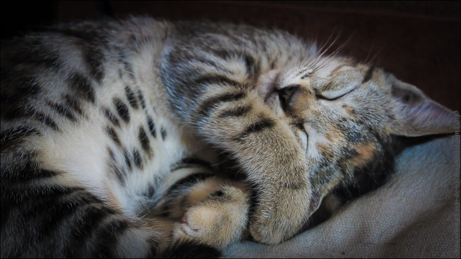 13.cats_and_dogs-03786