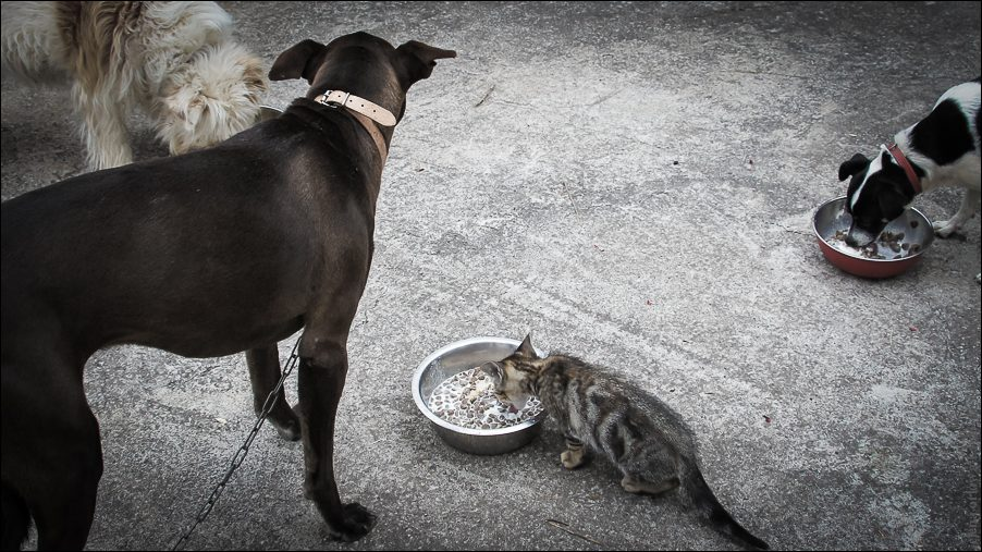 17.cats_and_dogs-03780