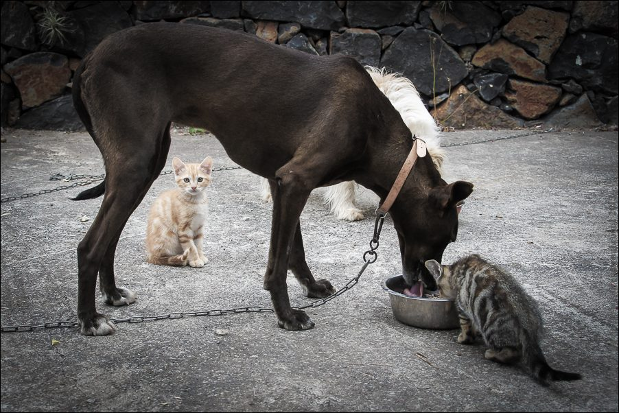 18.cats_and_dogs-03782