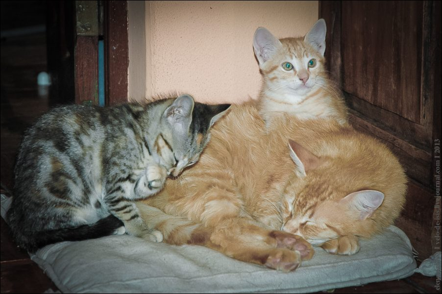 21.cats_and_dogs-0183