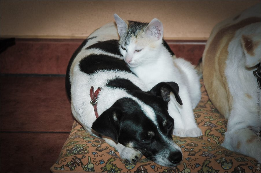 23.cats_and_dogs-0182