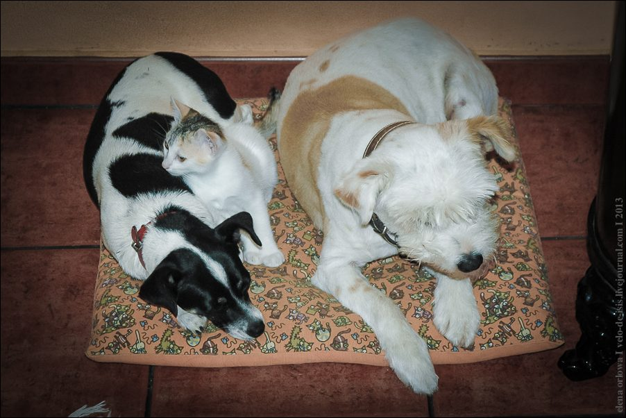 24.cats_and_dogs-0181