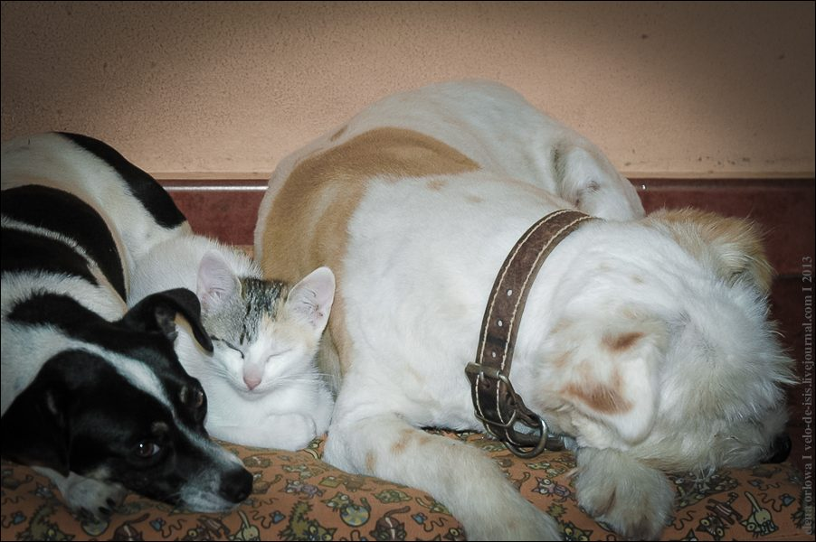 25.cats_and_dogs-0187