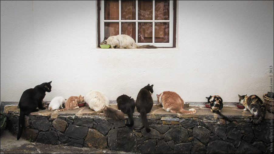 26.cats_and_dogs-03821
