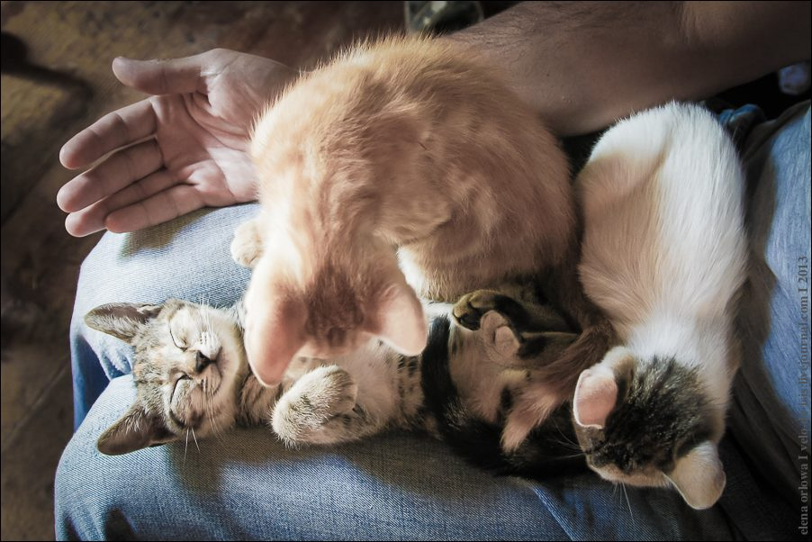 32.cats_and_dogs-03835