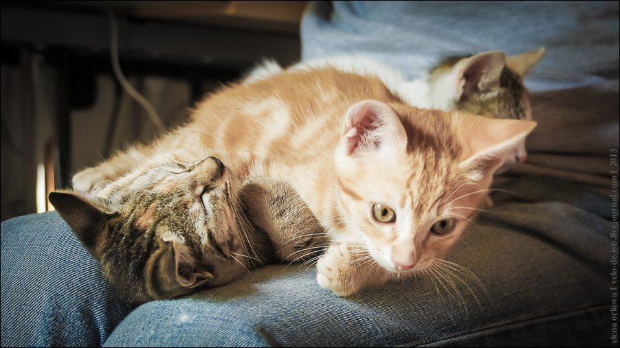 33.cats_and_dogs-03839