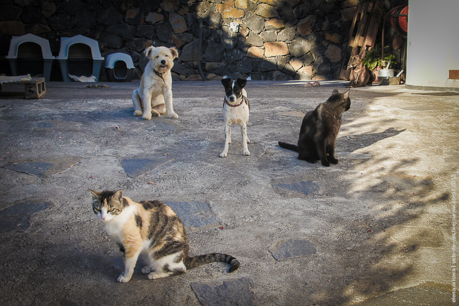 2.cats_dogs-04380