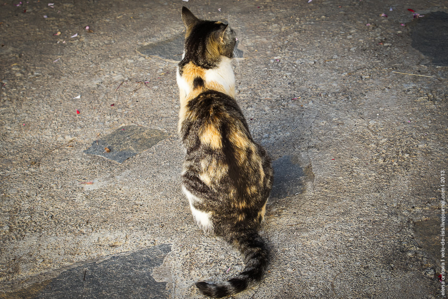 5.cats_dogs-04378