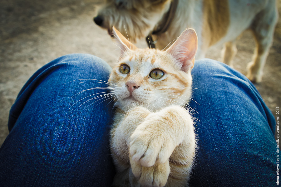 7.cats_dogs-04386