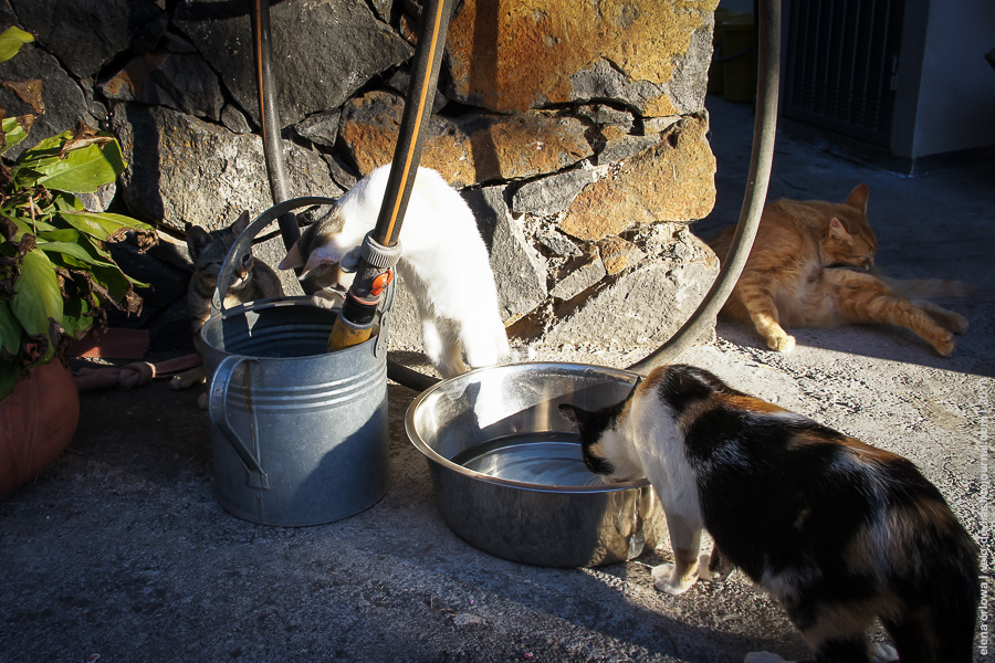 8.cats_dogs-04399