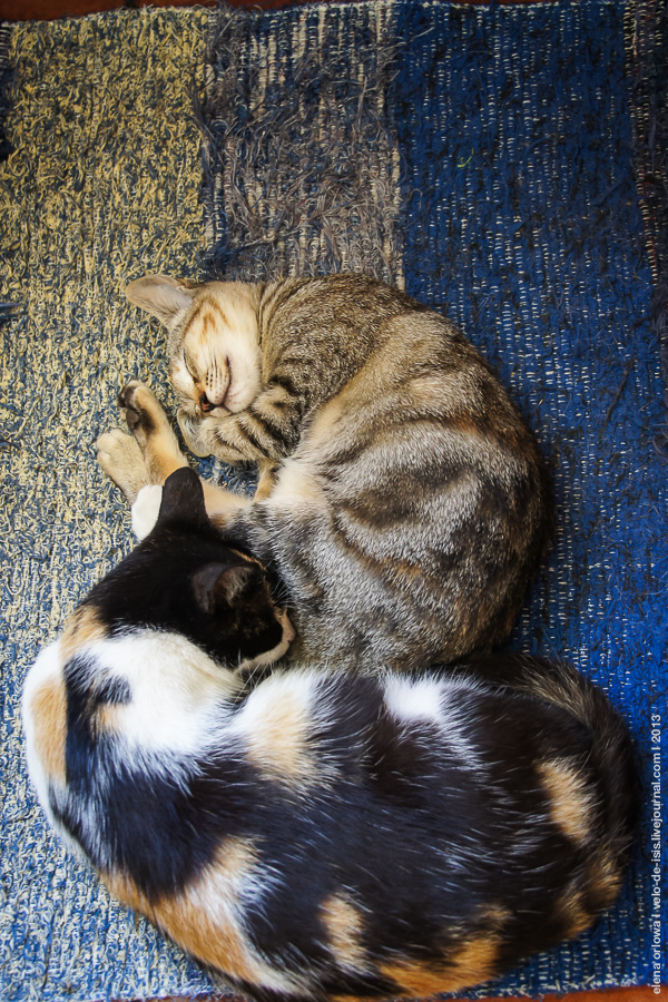 14.cats_dogs-04367