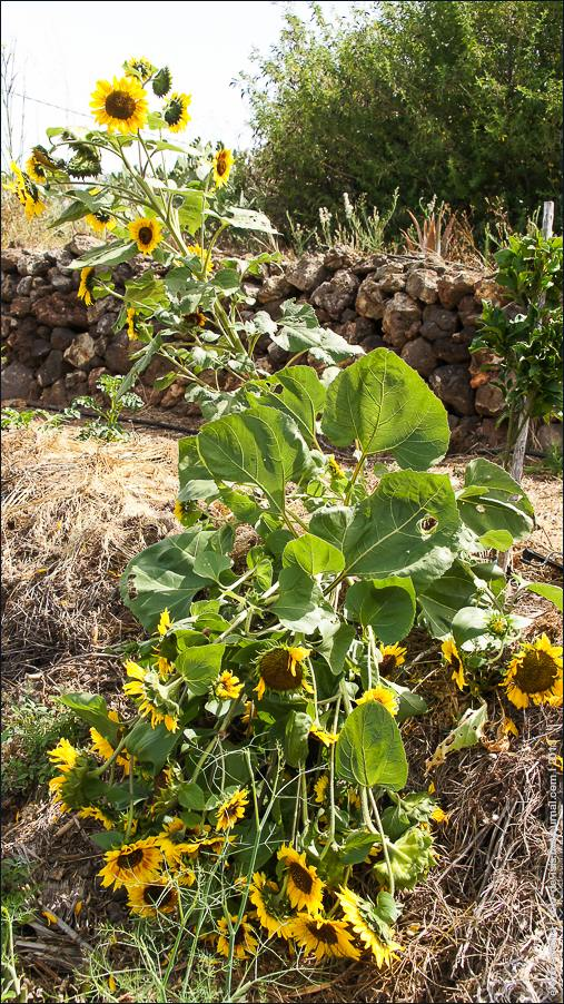 садовое-04600