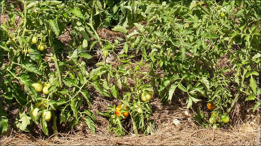 садовое-04593
