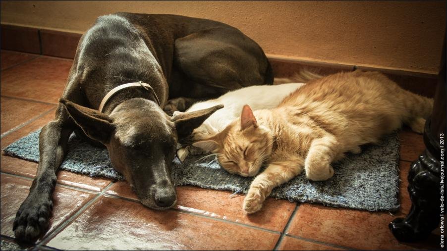 cats-04953