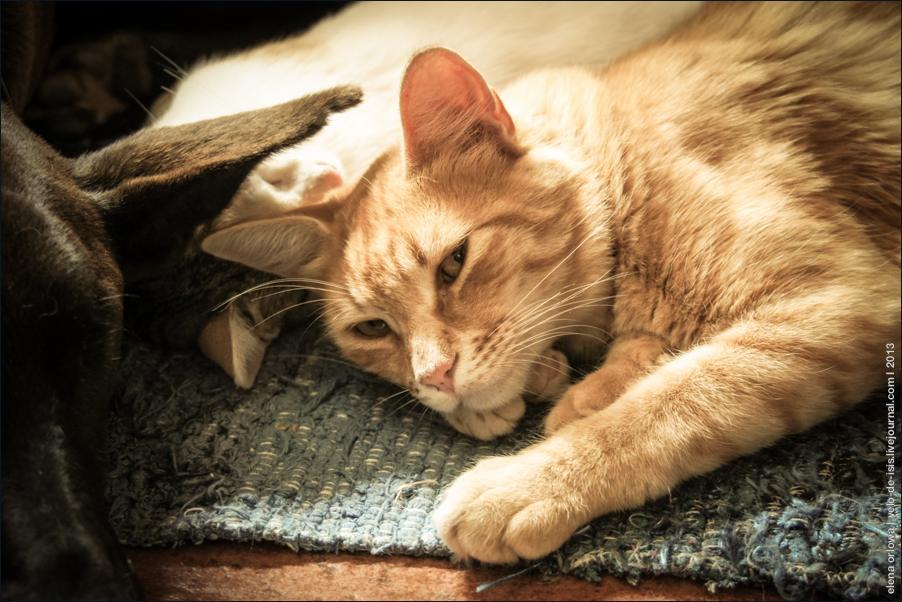 cats-04957