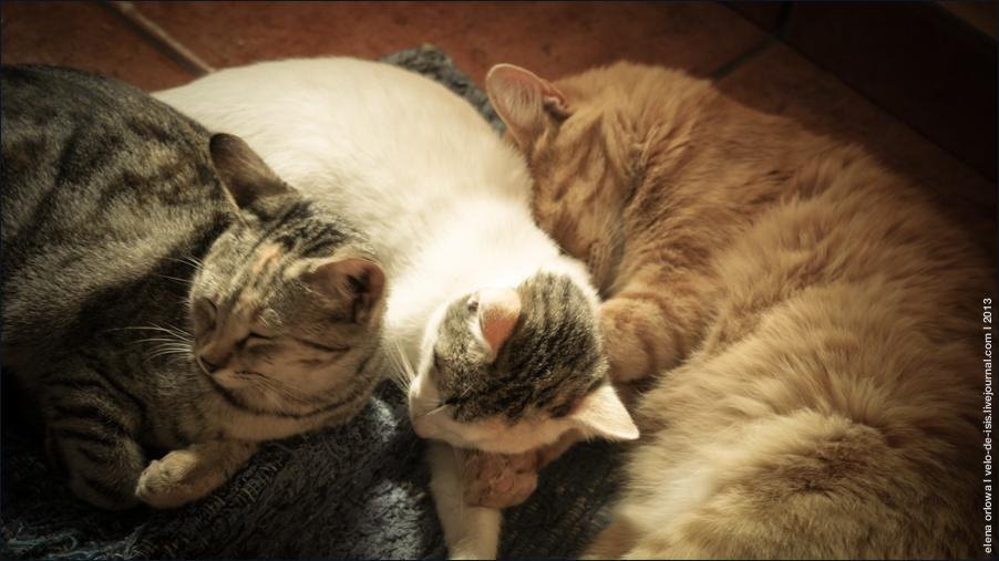 cats-04959
