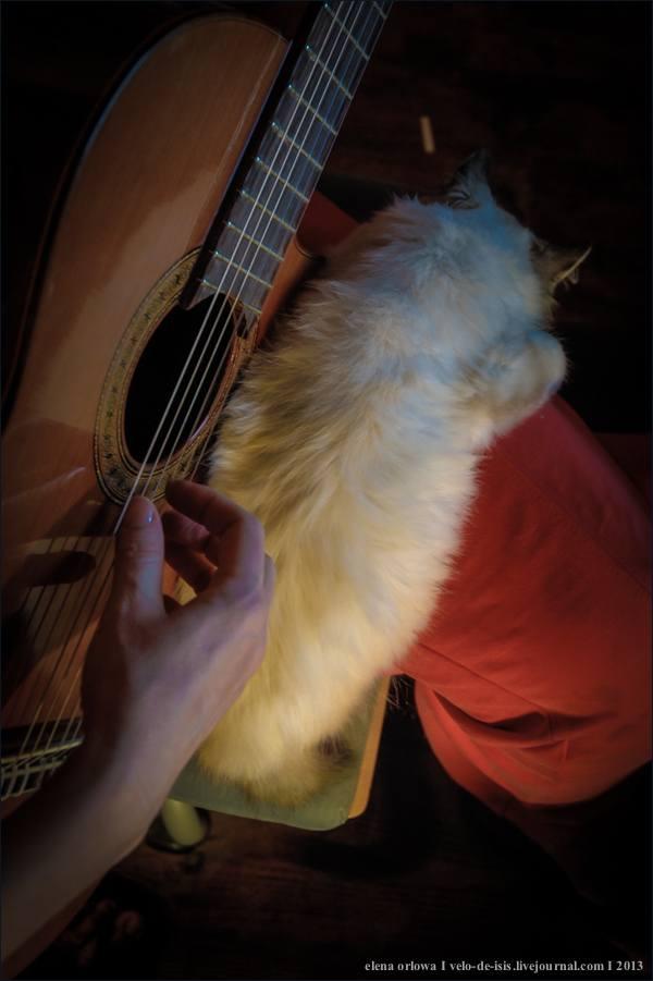 narine i gitara_