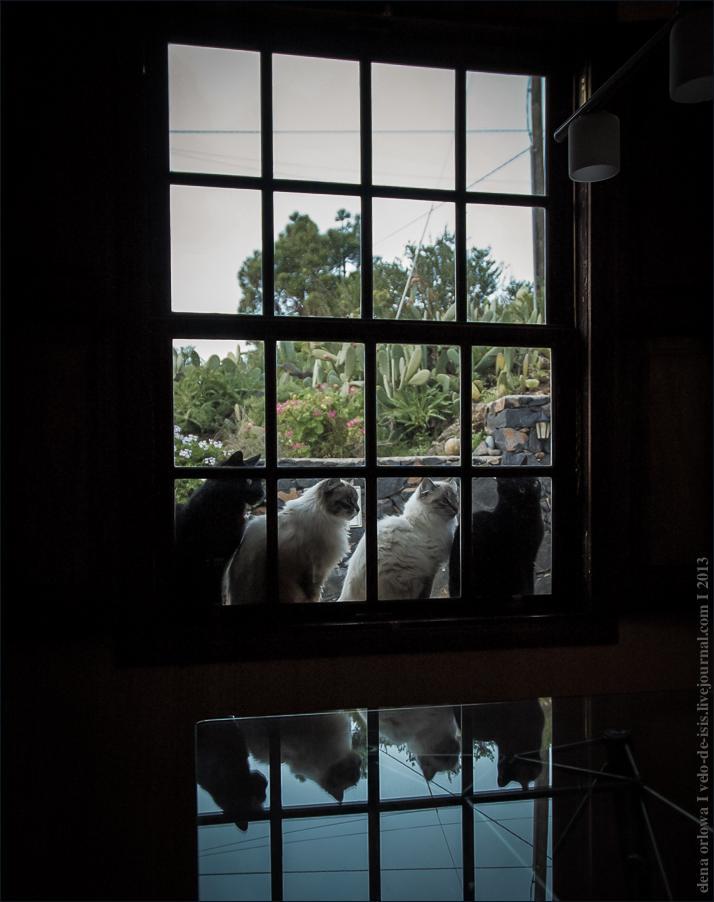 4_ v okne-0001