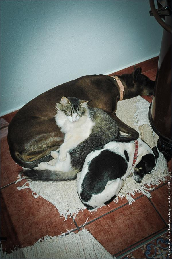 10_cats_dogs-0304