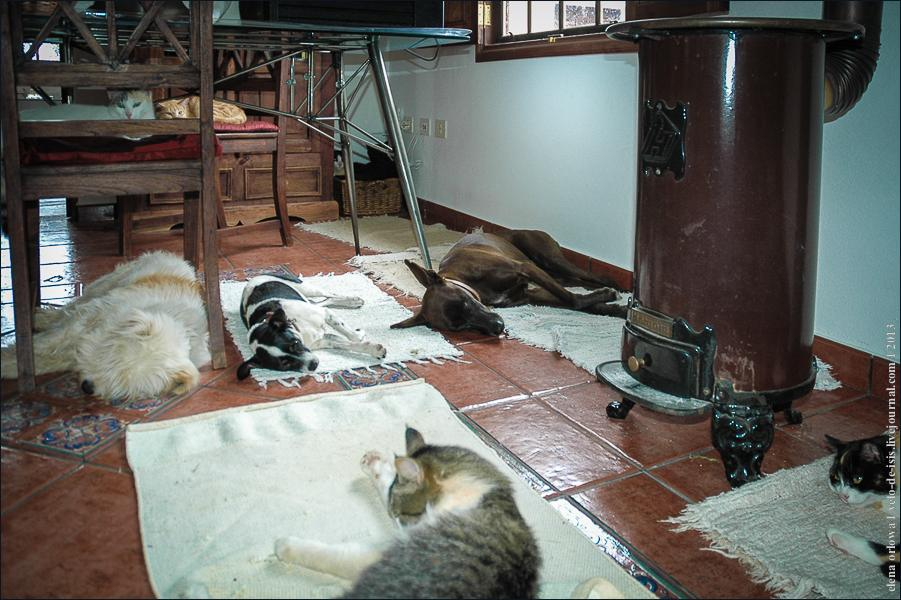 08_cats_dogs-0314