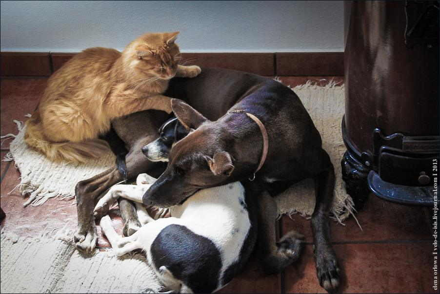 09_cats_dogs-06297