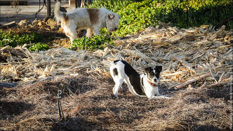 02_cats_dogs-06388