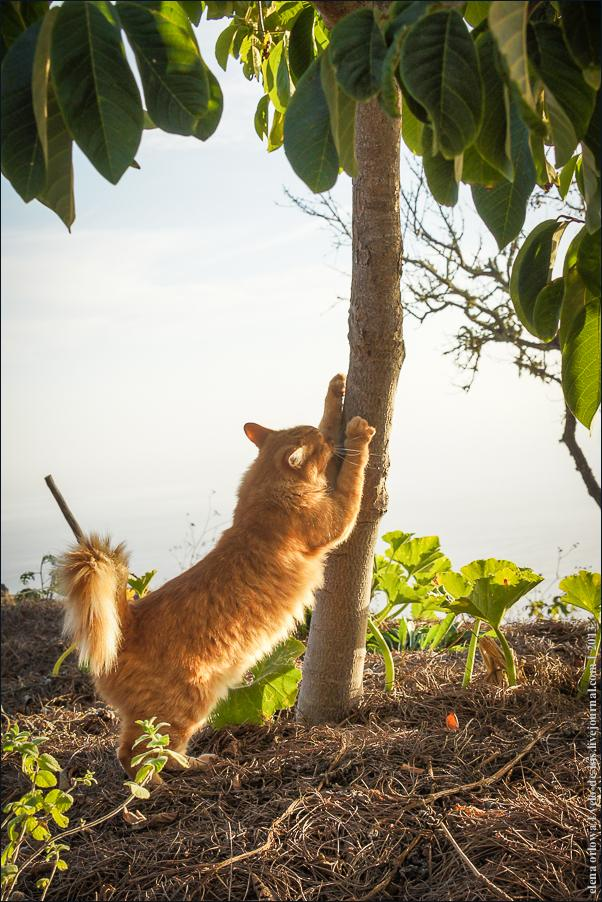 07_cats_dogs-06400