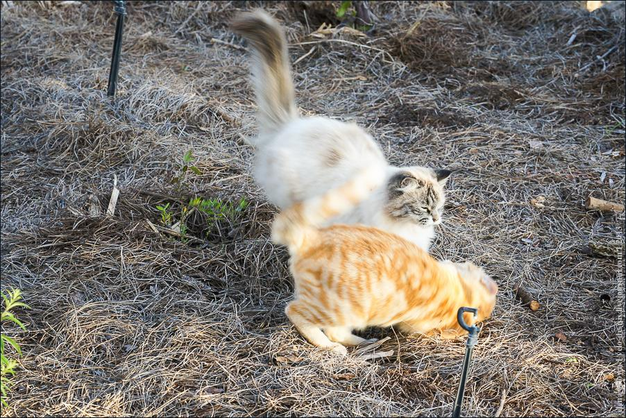 03_cats_dogs-06394